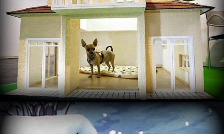 nice houses for dogs