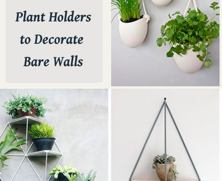 wall mounted plant holders